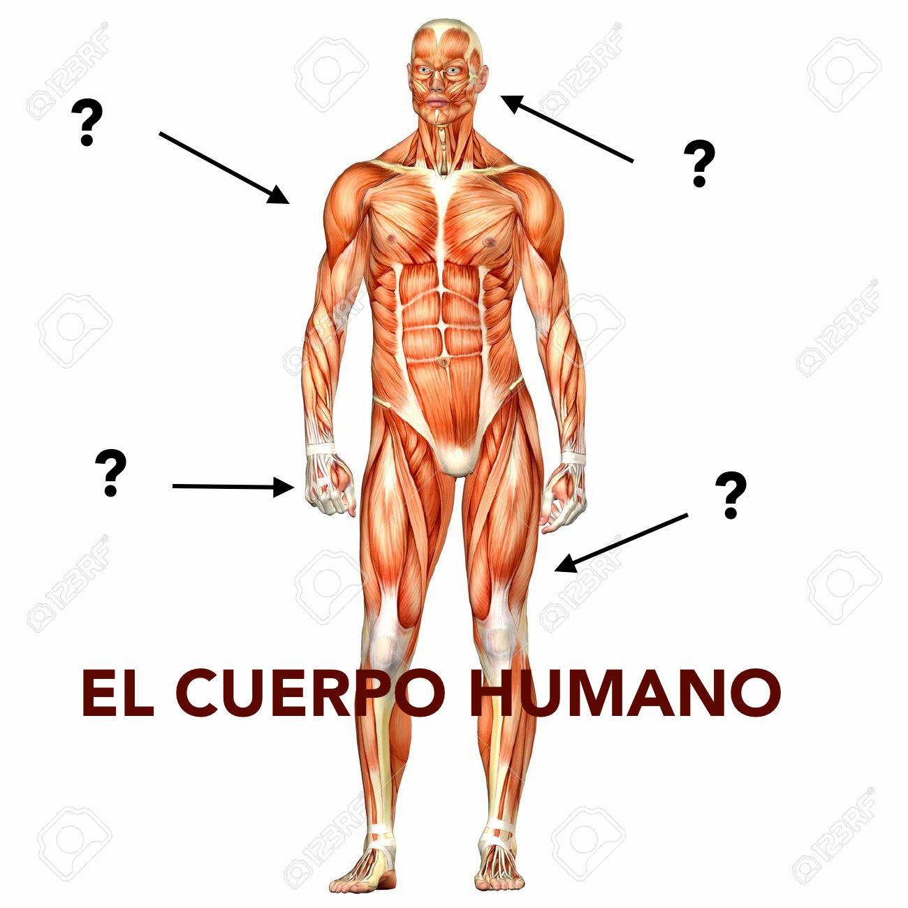 Faire une description physique en espagnol   coLanguage